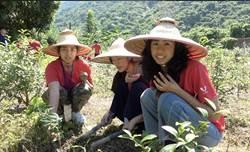 開發六龜農村 高雄農業局與樹科大辦體驗營