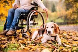 主人坐輪椅回家愛狗無情跑開 超暖舉動家人驚覺誤會了