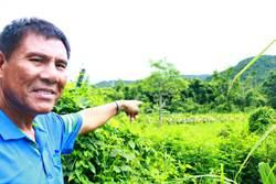 電網不敵猴害乾脆棄耕 滿州農會呼籲政府協助「結紮」
