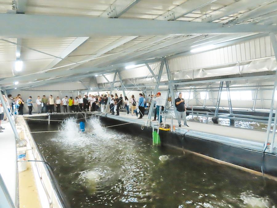 台鹽綠能與資策會合作,結合太陽能光電、AI智慧科技及大數據打造室內養殖示範基地,採用的「智慧水產雲 」科技養殖系統,就如同漁民水中的數位分身。(莊曜聰攝)