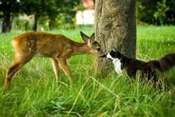 陌生鹿闖進自家庭園「陶醉吸貓」逾12萬人笑炸