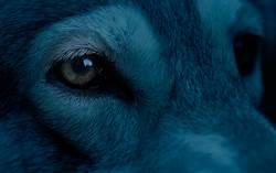 憨犬在油畫上狂打滾變藍色 主人狂洗4天不敢帶出門