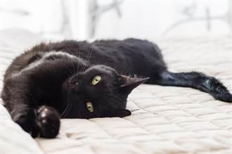床上驚見「間諜衣架」?黑貓超強偽裝術 睡覺不忘防身