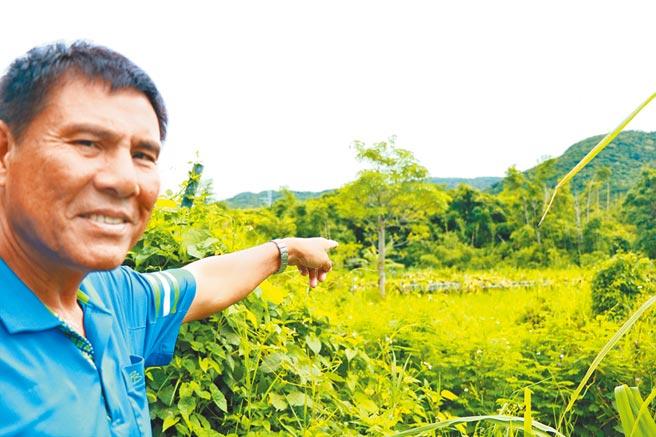滿州農會總幹事陳清木指出,「猴害農損」未因政府補助電網設施而降低,農友有感獼猴防不勝防乾脆棄耕。(謝佳潾攝)