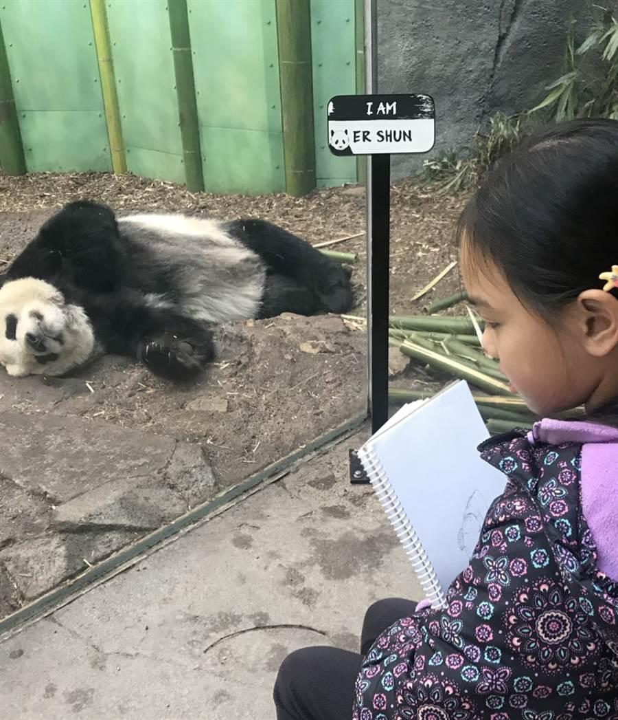 加拿大卡加立動物園的大貓熊二順,是遊客心目中的動物明星。(摘自卡加利動物園官方推特)