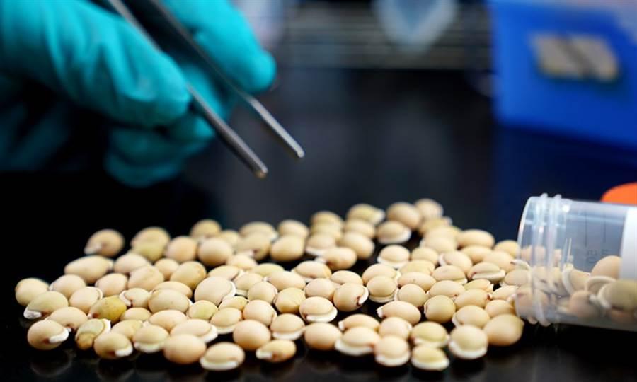 白扁豆其實就是俗稱的「皇帝豆」,是相當常見的食材和藥材。(圖/中央研究院網站)