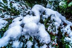 夏天路上出現2攤雪攝影師困惑 晚上拍到喵星人露出原形