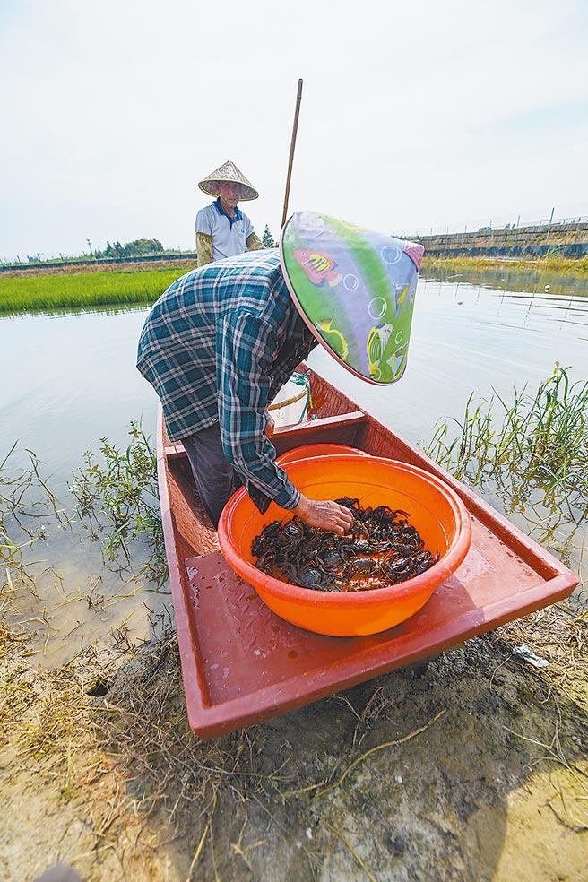 7月22日,浙江養殖戶捕撈小龍蝦和湖蟹。(新華社資料照片)