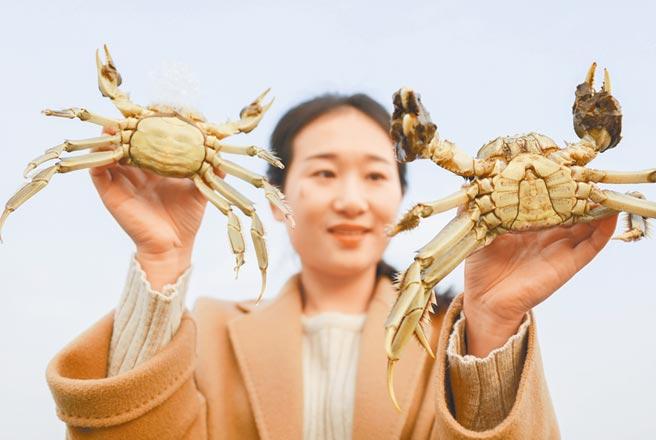 江蘇淮安淮河鎮一大閘蟹養殖基地。(新華社資料照片)