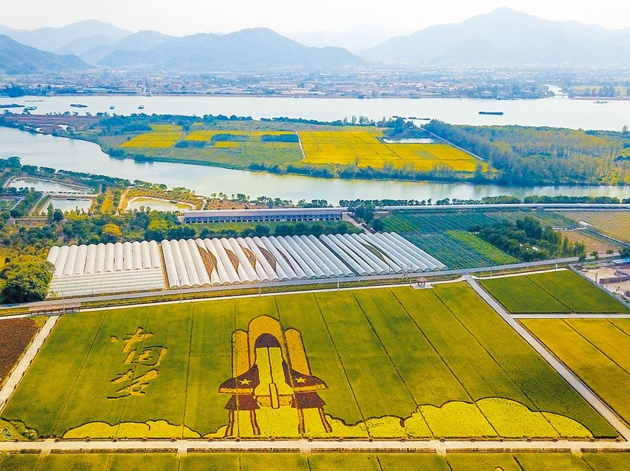 浙江省東洲島上「中國夢」為主題的創意藝術稻田。(中新社)