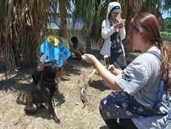 年輕義工相約遛狗  在父親節當起毛小孩的臨時父母