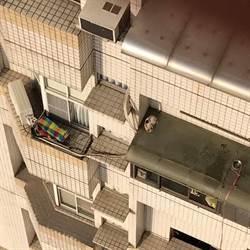 瘦弱三花貓受困8樓遮雨棚2週被誘捕收編 3年後「澎皮2倍」長成瓦斯桶