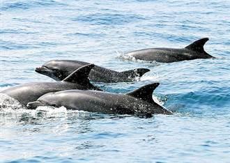 小艇「催落去」衝撞龜山島成群海豚 畫面流出掀公憤