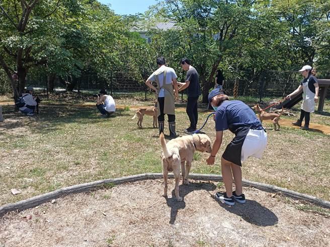義工們各自牽著狗隻在寵物公園內散步、餵食小零食以及拍「宣傳照」,希望能早日幫浪浪找到 新家。(胡健森攝)