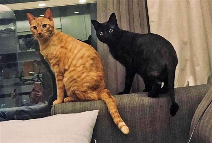 啾啾和Vitas兄弟俩相差12岁,但相处很融洽。(图/齐石传播提供)
