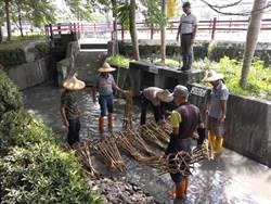 飲水思「石笱」 雲林水利會復刻竹編簡易攔水壩