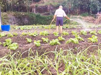 有機質肥料利多!提升作物品質還能維護環境