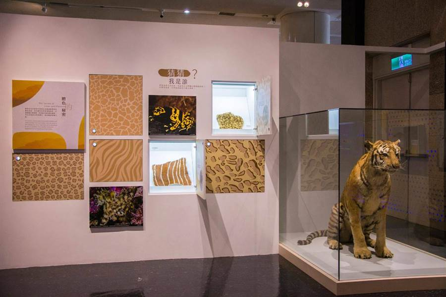國立自然科學博物館特展「自然變調─失序的生態系」展場一隅。(教育部提供/林志成台北傳真)