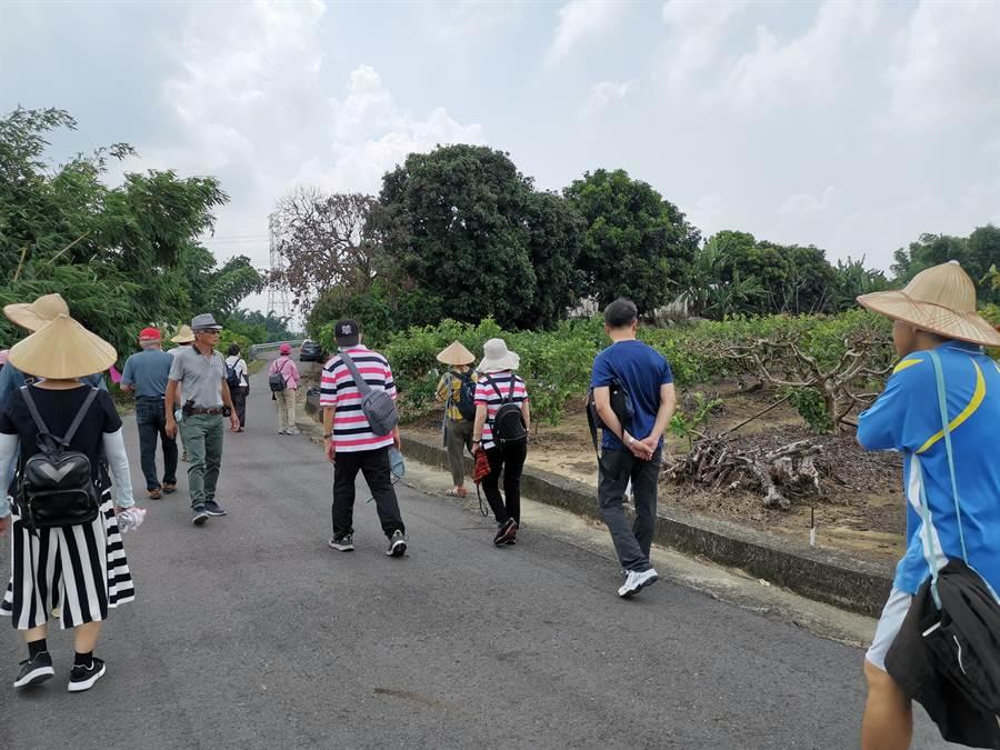 遊客跟隨導覽解說員到果園採果。(劉秀芬攝)