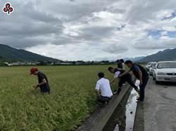 109年二期水稻保險銷售至月底 農友把握投保機會