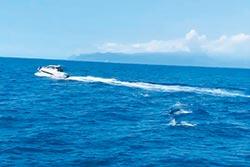 宜蘭遊艇騷擾鯨豚超惡劣 海巡署法辦