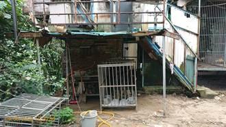 北市3黑狗遭關小鐵籠難動彈 飼主慘了
