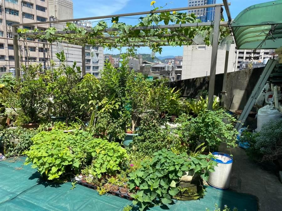 基隆市信義區仁壽里民,發起節能減碳運動,集體在里內民宅屋頂,動手打造「屋頂農園」。(基隆市環保局提供/張穎齊基隆傳真)