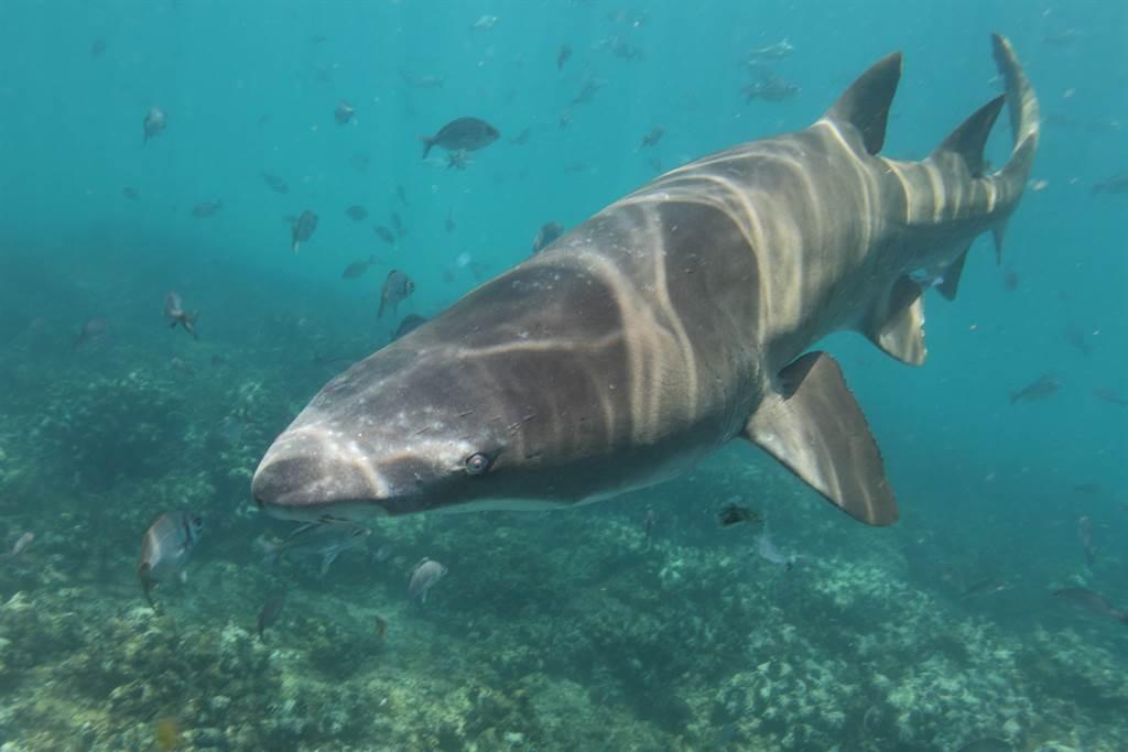 游艇趴爽溜滑水道 一下海竟直接与3M巨鲨「大眼瞪小眼」(示意图/达志影像)
