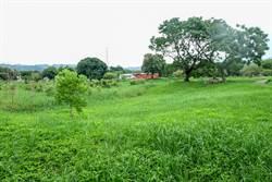 竹縣竹東河濱公園年底再現生態池美景