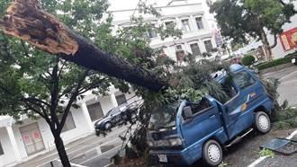 米克拉颱風掠過金門 全島590戶停電多起樹倒