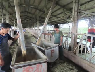 外籍農業移工上線 印尼老師成酪農好幫手
