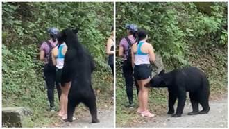 小黑熊見短褲辣妹狂抱大腿 恐遭「閹割」命運