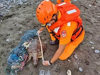 不敵海廢 綠蠵龜遭廢棄漁網糾纏致死
