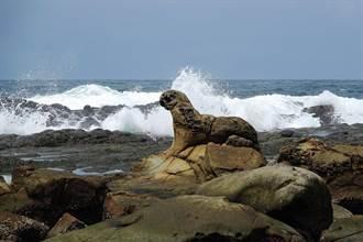 保護「海豹岩」勢在必行 基隆鳥會盼爭取綠獎守護