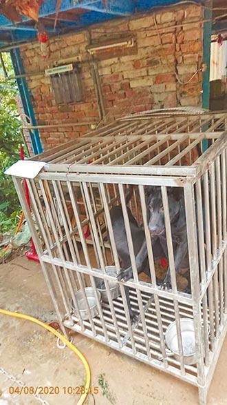 0.34坪鐵籠擠3隻狗 飼主挨罰