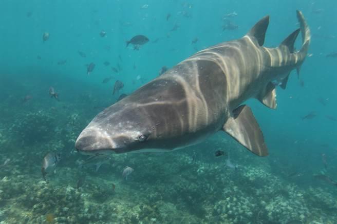 遊艇趴爽溜滑水道 一下海竟直接與3M巨鯊「大眼瞪小眼」(示意圖/達志影像)