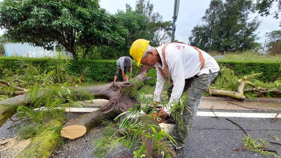 縣林務所動員大批人力、機具移除風倒樹木之二。(金門縣林務所長鐘立偉提供)