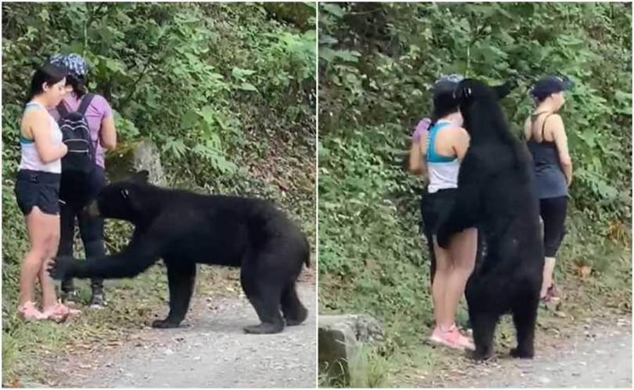 小黑熊對短褲妹伸出熊掌試探又聞遍女子全身。(圖/TikTok 「PonchoDeNigris」)