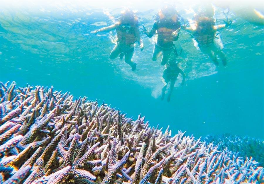澎湖南方四島國家公園海底珍貴珊瑚礁生態慘遭破壞。(民眾提供/陳可文澎湖傳真)