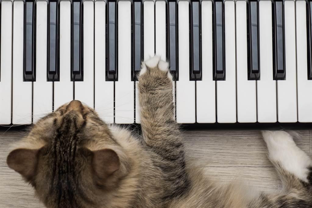 貓皇餓了就彈鋼琴 超優雅催飯法網笑翻(示意圖/達志影像)