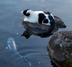 貓咪靜靜呆坐池塘邊 鯉魚下秒竟「嘟嘴討親親」