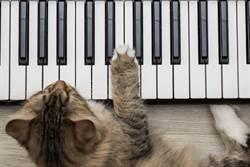 貓皇餓了就彈鋼琴 超優雅催飯法網笑翻