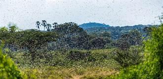 拜耳與肯亞、烏干達攜手對抗蝗災 治療17萬公頃受損農地