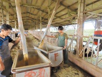收入高6倍 印尼老師來台當酪農