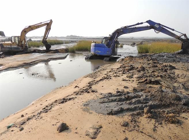 互花米草帶來濱海生態環境破壞問題,縣府連年雇工大面積移除。(縣府建設處提供)