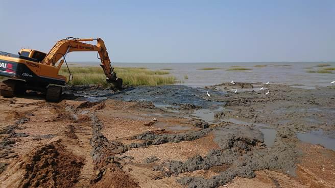 金門持續移除互花米草,自2008年至2019年間,移除面積已達111公頃。(縣府建設處提供)
