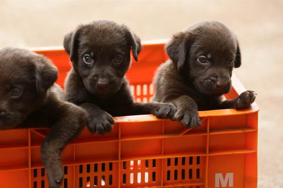 真的是親生?白拉拉狂生13隻小黑狗 全家福照超違和(示意圖/達志影像)