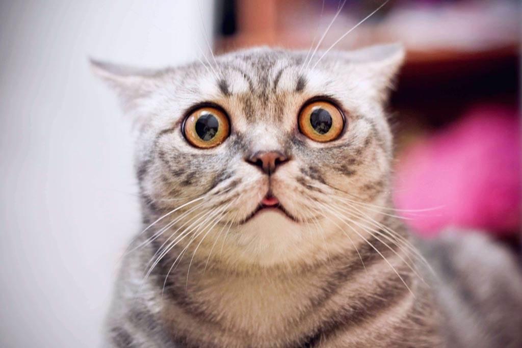 嬌貴貓皇被熱氣「煞到」暴衝進屋 笑翻220萬人(示意圖/達志影像)