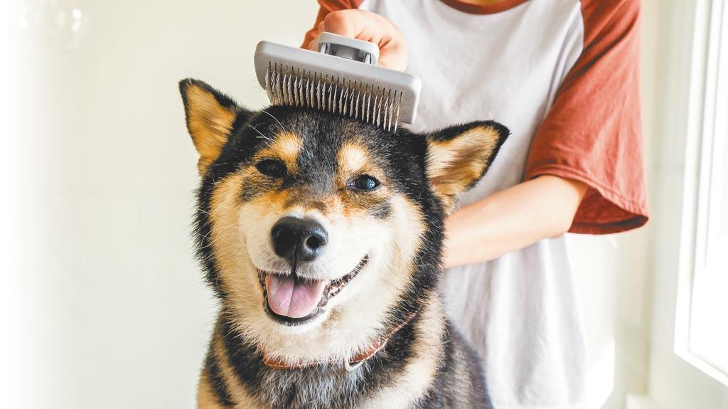 URBANER奧本寵物CT-32伸縮清毛針梳,經常梳理廢毛可增進毛寶貝皮膚新陳代謝、血液循環,550元。(奧本寵物提供)