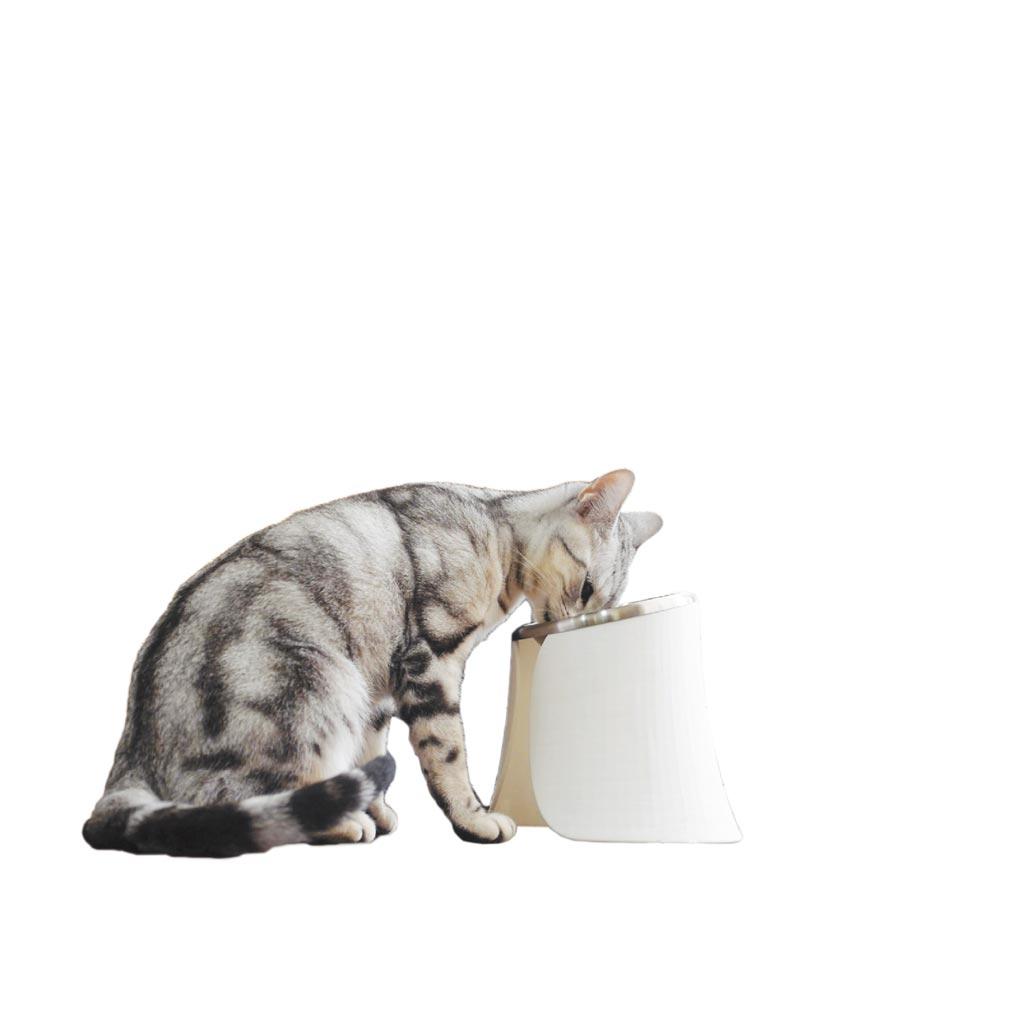 PETIFUL朕大碗黝黑、紅、白3色可選,貓咪或小型犬都適用,590元(愛思沛提供)